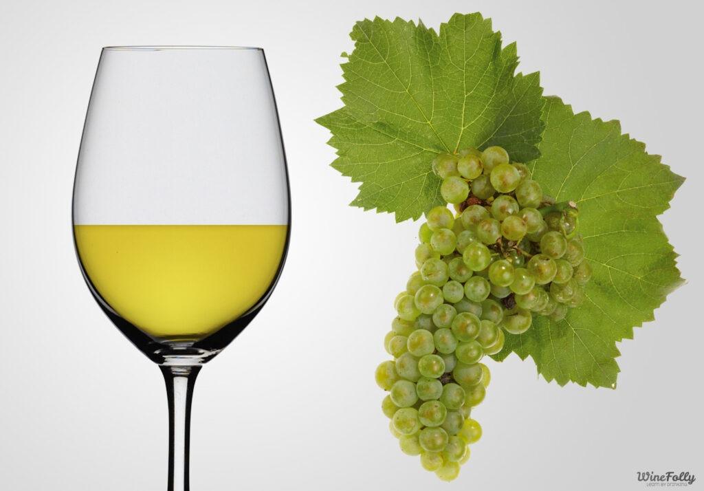 Racimo, hoja y copa de Chardonnay - Fuente winefolly.com