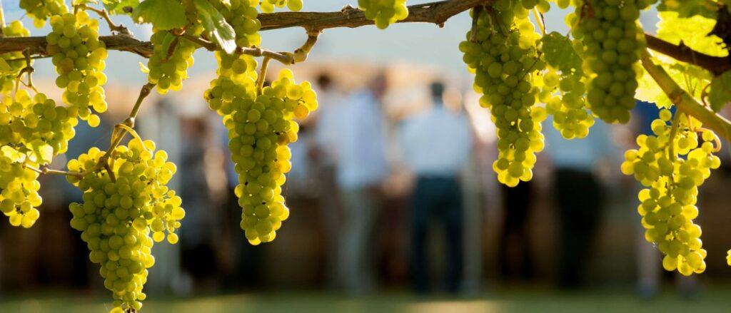 15 Chardonnay Recomendados